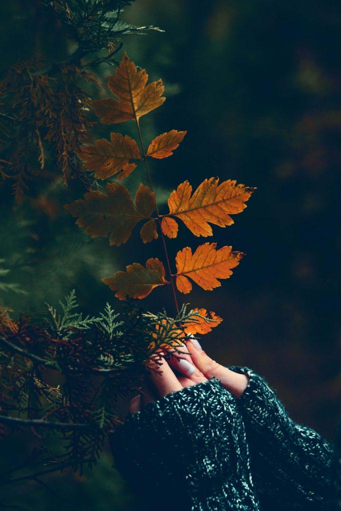 γιατί να αγαπάς το φθινόπωρο