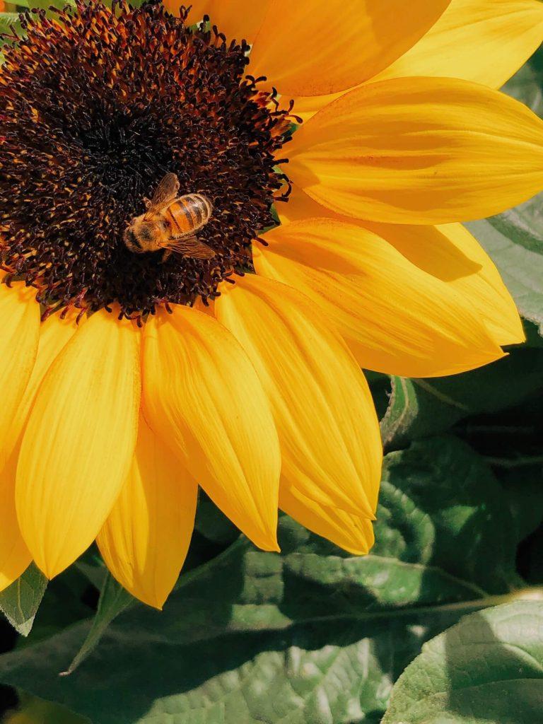 η ιστορία της μέλισσας και της μύγας